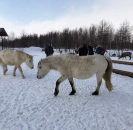 사할린의 겨울 풍경 - 추모관과 록산원 농장을…